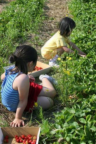 The Girls Strawberry Picking