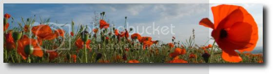 Poppy Pictures, Images and Photos