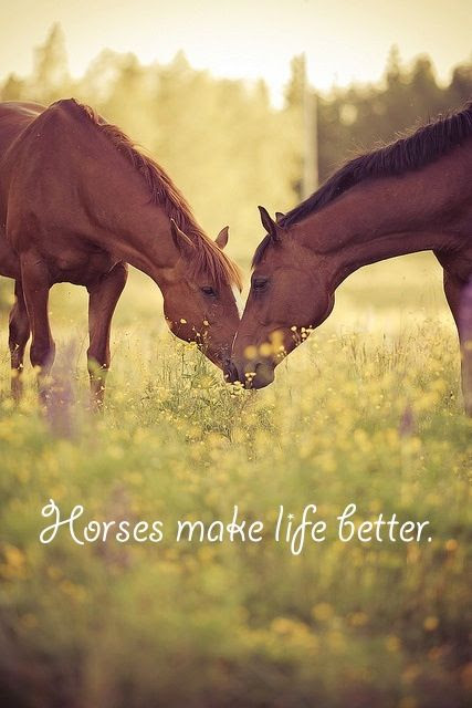 Horses make my life better!  <img src=