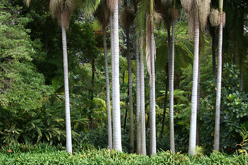 huntington tropical garden