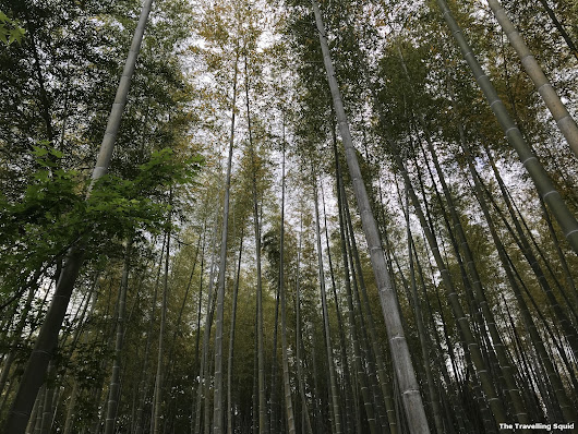 Five things to know about the Arashiyama Bamboo Forest in Kyoto (Part 1) - The Travelling Squid
