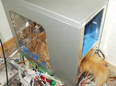 Computer Cat 2