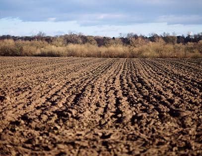 Photo: Image of tilled soil