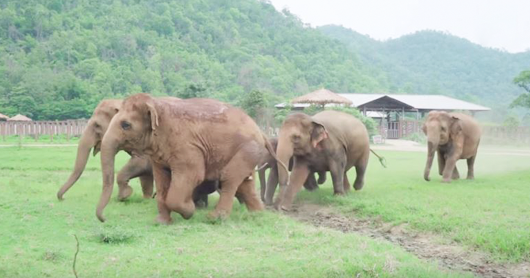 Elephants Run To Say Hello To A Rescued Baby Elephant, Prove They Are Better Than People