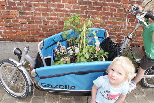 Plantjes in de bakfiets