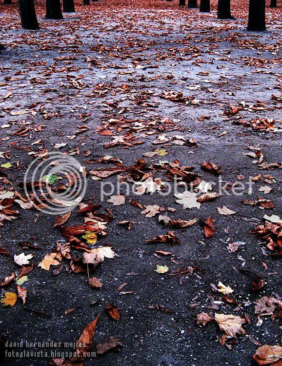 Suelo de un parque cubierto de hojas secas en los Campos Elíseos de París (Francia)