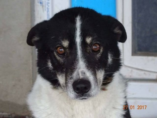 Charlie – 9 year old male Cross-Breed