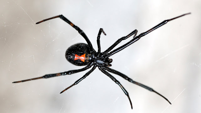 The Meaning And Symbolism Of The Word Spider