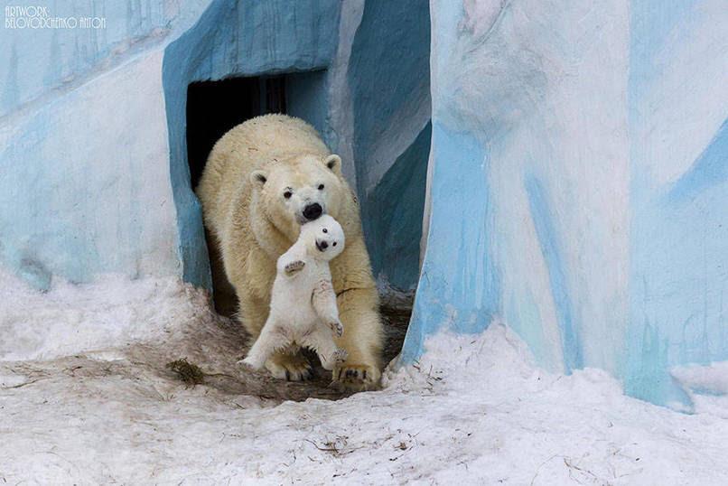 tilestwra.com | 15 ζώα που δεν αντέχουν άλλο τα καπρίτσια των παιδιών τους!