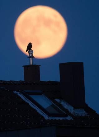 Notte di luna piena, un corvo su un tetto di Hannover
