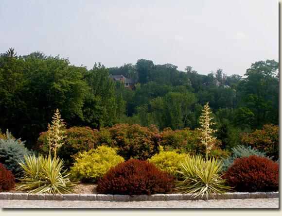 Expert Articles Deer Resistant Gardens Planting Gardens