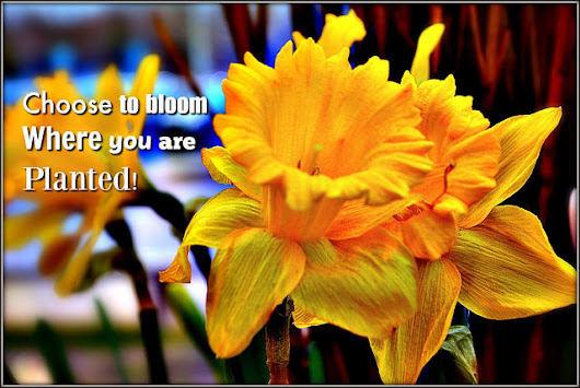 Choose to Bloom – No Matter What!