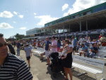Tampa Bay Downs -- Nov. 28, 2015 -photo by Barry Unterbrink