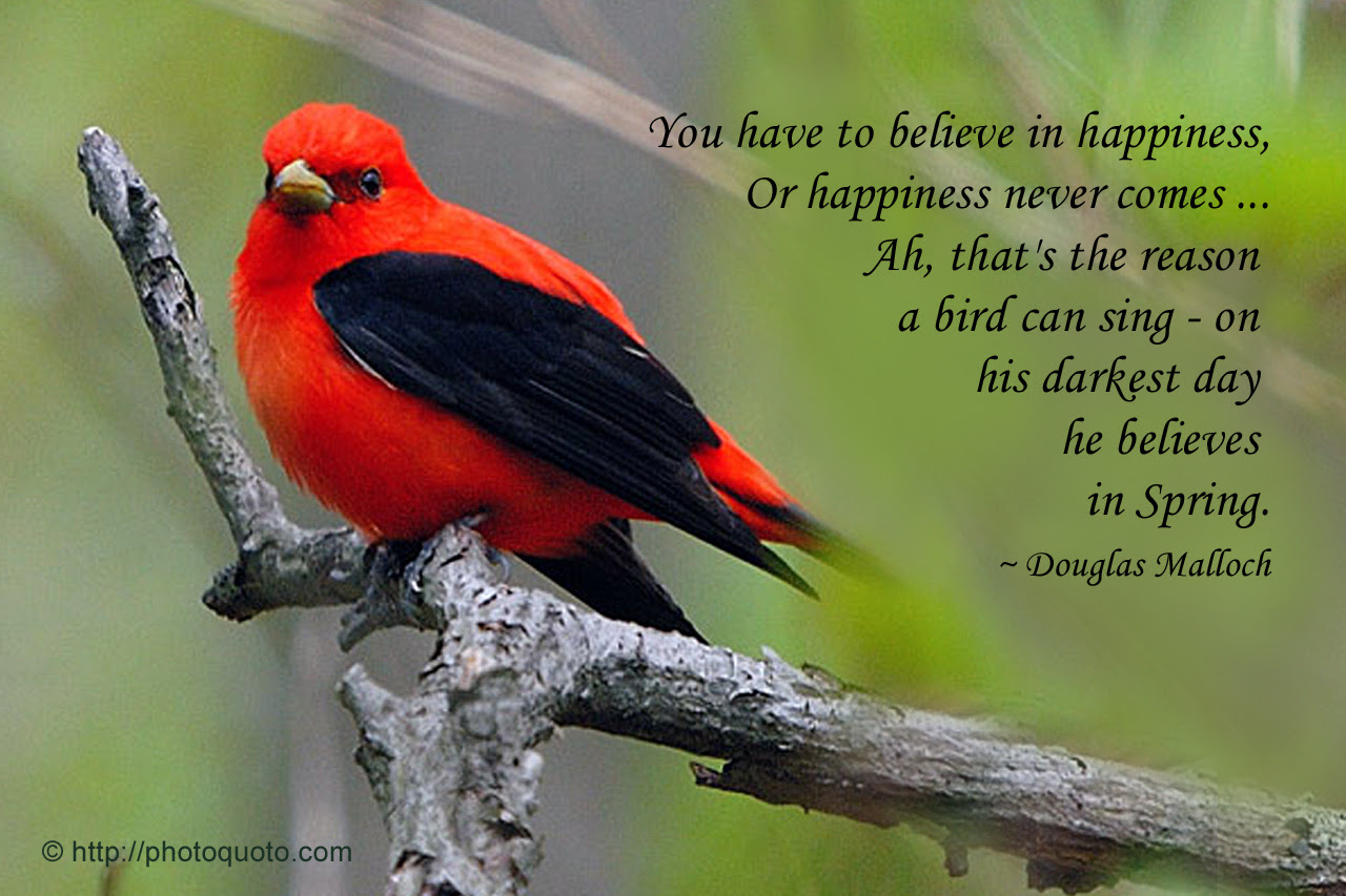 Quotes About Spring Birds 35 Quotes