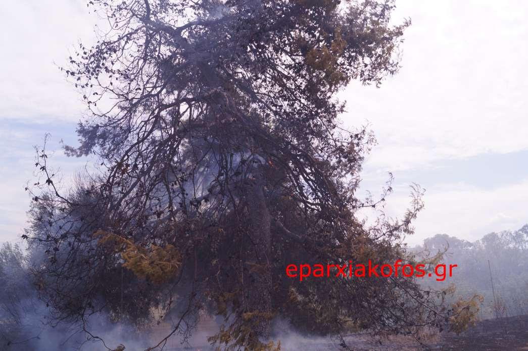 image0119