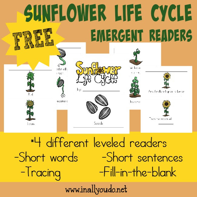 FREE Sunflower Life Cycle Readers - Blessed Beyond A Doubt
