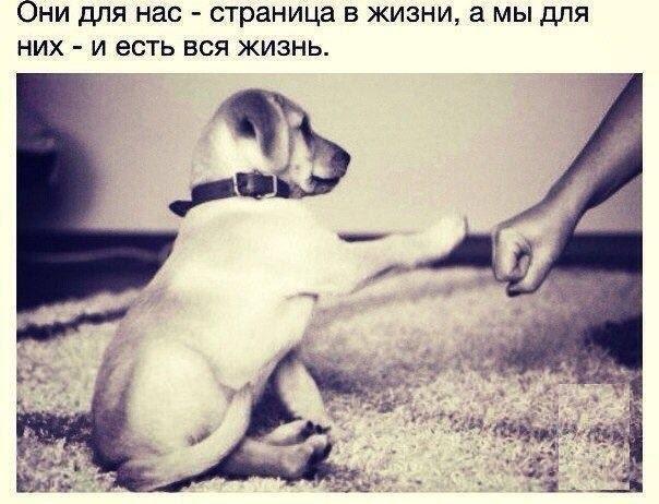 Наши друзья животные, сделай сам