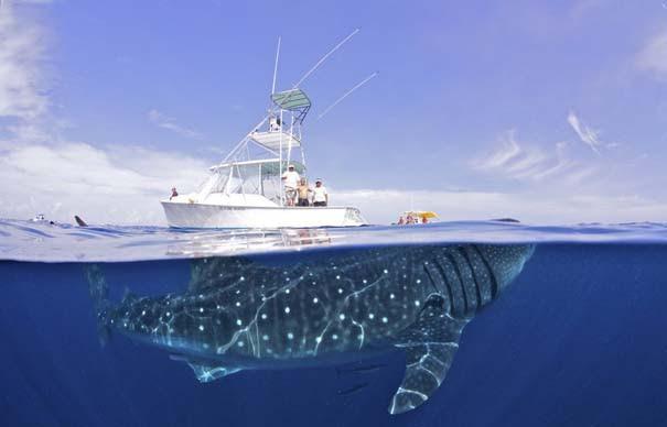 Οι 50 καλύτερες φωτογραφίες ζώων του 2012 (28)