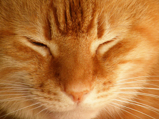 Healing the Inner Feline: Cats and Reiki - Petful