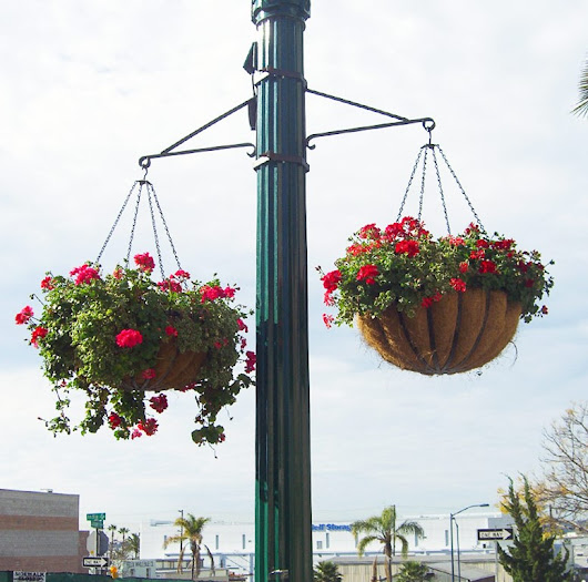 Fabulous, No-Fuss Commercial Hanging Baskets: Buying and Care Tips - Planters Unlimited Blog
