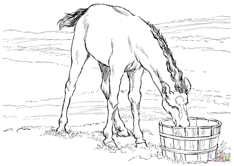 Coloriage de cheval frison a imprimer haut coloriage hd images et imprimable gratuit - Frison qui saute ...