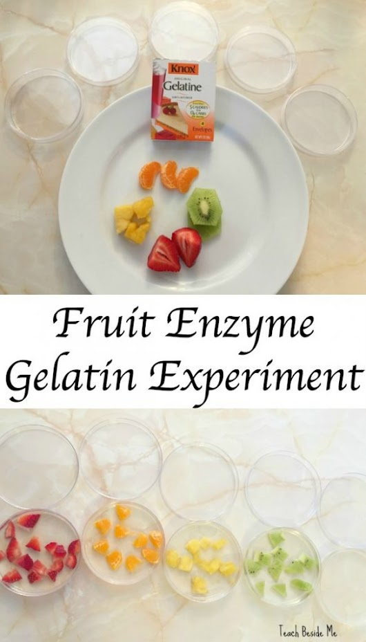 Fruit Enzymes Gelatin Experiment - Teach Beside Me