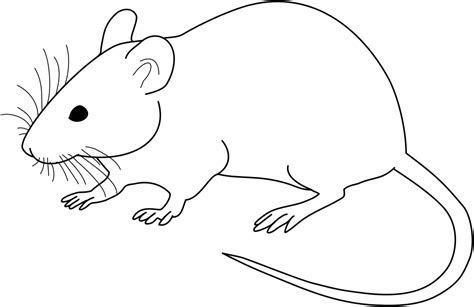 File:Vector diagram of laboratory mouse (black and white).svg   Wikimedia Commons
