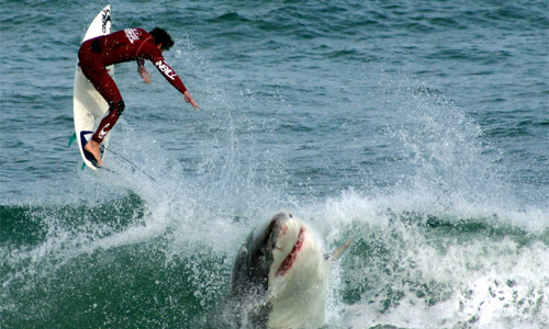 Drones can protect people from shark attacks in Australia • Full Drone
