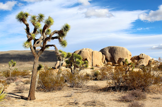 Climate Change at Joshua Tree National Park - Ranger Mac
