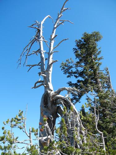 Crater Lake, Oregon _ 6588