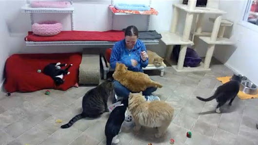 Blind Cat Rescue and Sanctuary