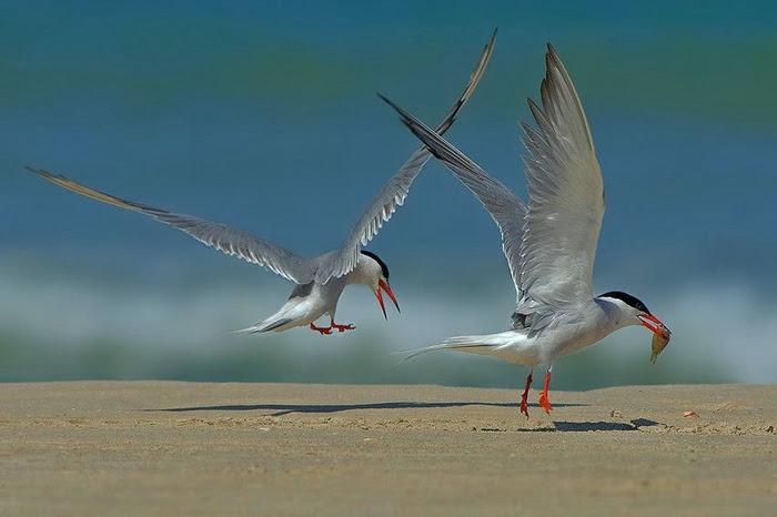 Bird_16 (700x466, 151Kb)