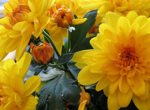 yellow :. gult