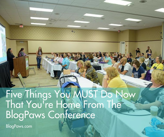5 Things You MUST Do Now That You're Home From BlogPaws Conference - BlogPaws