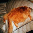 Diabetes and obesity in cats