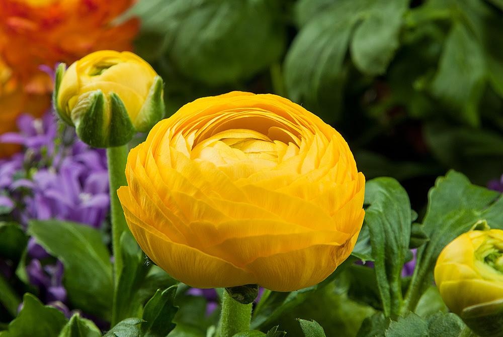 Frühlingsblumen Foto & Bild | Natur, Blüten ...