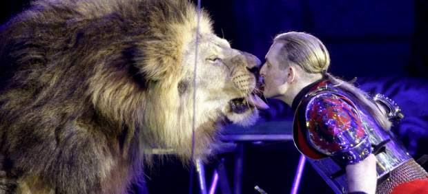 Un león de circo