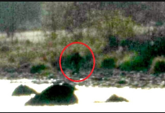 'Bigfoot' reportedly sighted in Northern California, pictures go viral