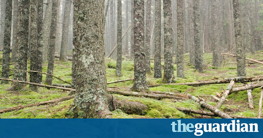 Into the woods: how one man survived alone in the wilderness for 27 years | Michael Finkel | News | The Guardian