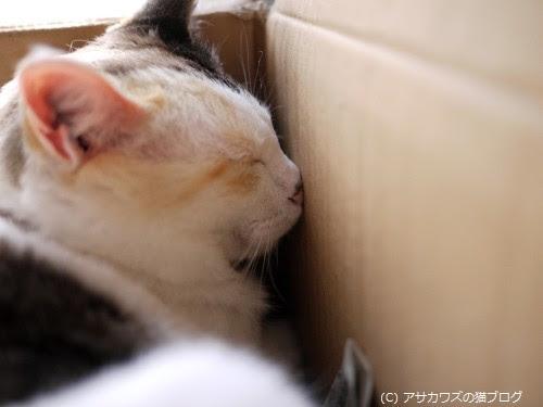 猫はなぜ狭い所が好きなのか