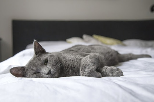 5 Reasons To Share Your Bed With Your Cat - iHeartCats.com