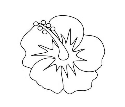 Free Hibiscus Flower Coloring Page Download Free Clip Art Free Clip Art On Clipart Library