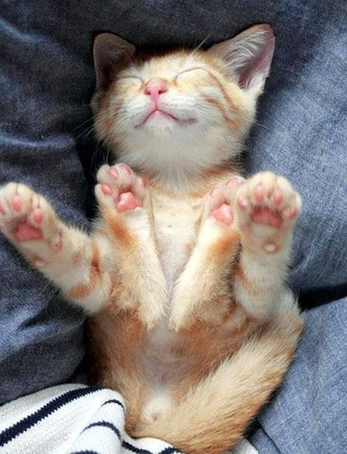 Stretching kitten
