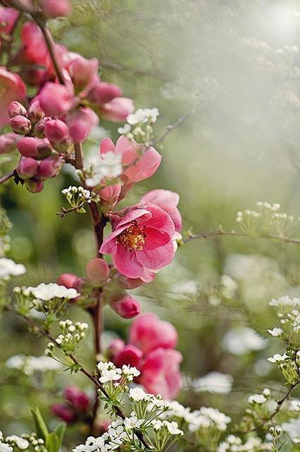 "seasonalwonderment: "" ~ Spring Has Sprung ~ """