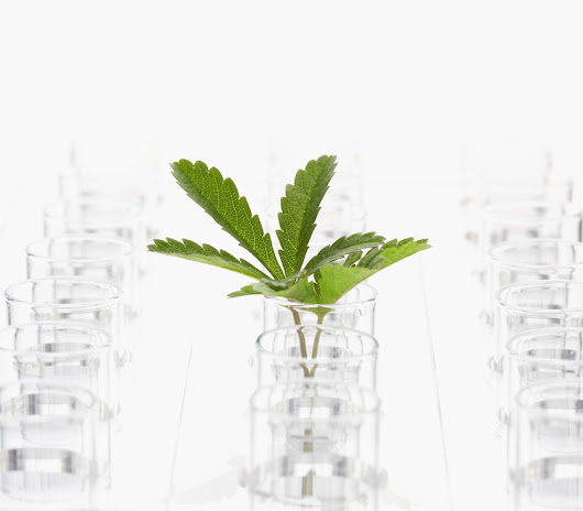 Aurora Cannabis to Acquire Cannabis Science Leader Anandia Laboratories Inc.