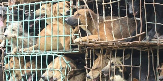 petition: End the Yulin Dog Meat Festival
