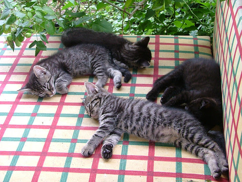 gatti che dormono