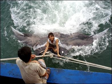 china_stingray01 Giant 3,300 Lbs Stingray Caught by Local Fisherman picture