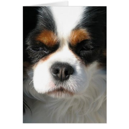 Adorable King Charles Spaniel Greeting Cards