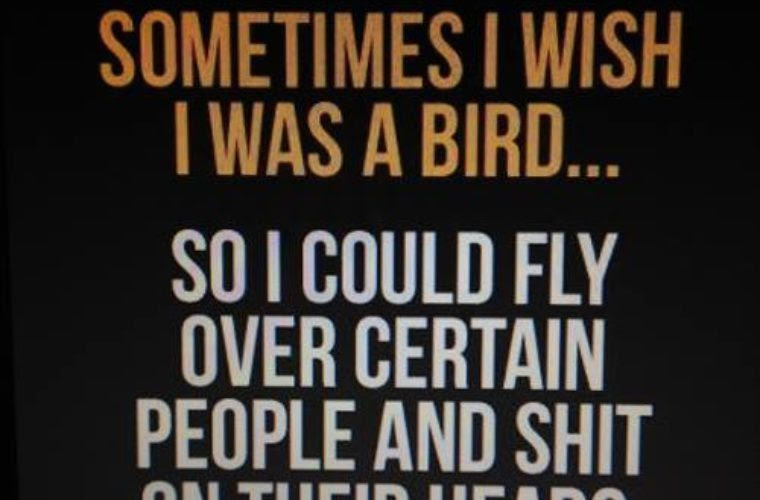Sometimes I Wish I Was A Bird Funny Pictures Quotes Memes Funny